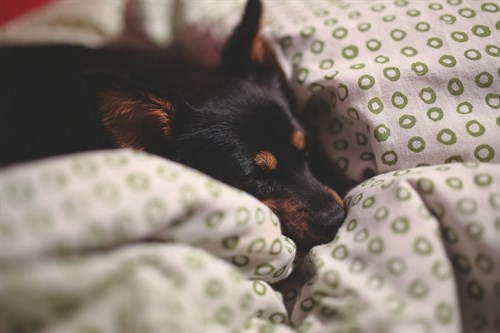 TV show discovers bad bedtime behaviour down to family dog