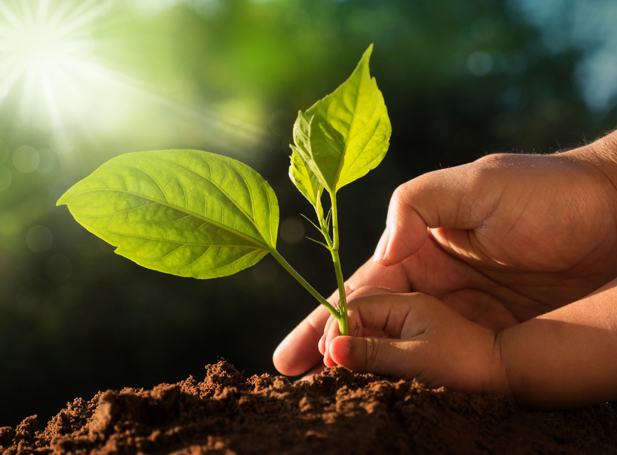 10 small changes you can make to help the planet