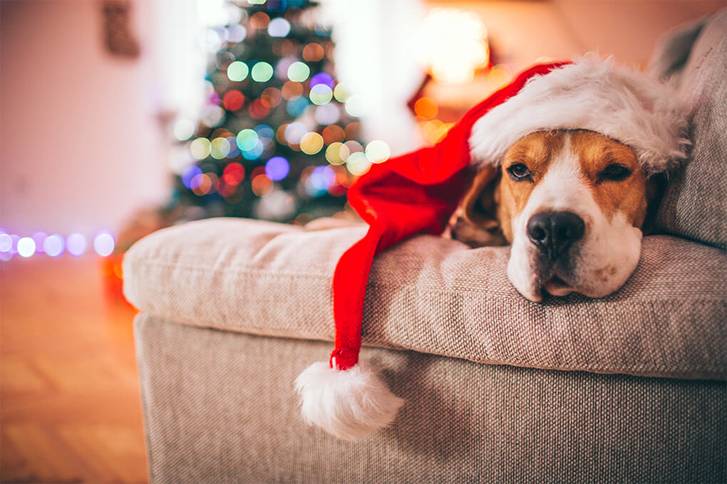 Is the Festive 'food coma' a real thing?
